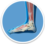 Foot And Ankle - Orthopaedic Surgical Specialist