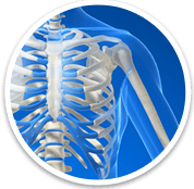 Shoulder - Orthopaedic Surgical Specialist